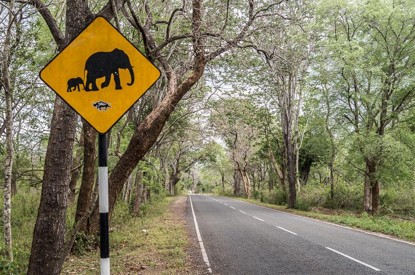 road-sri-lanka