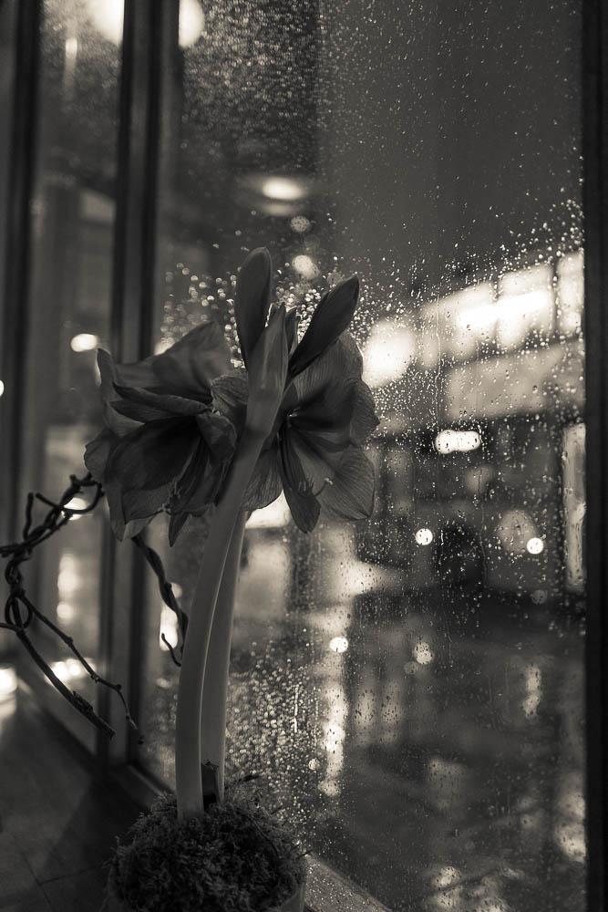 un fleur dans la peau d'un péruvien, un péruvien en fleur... Andina