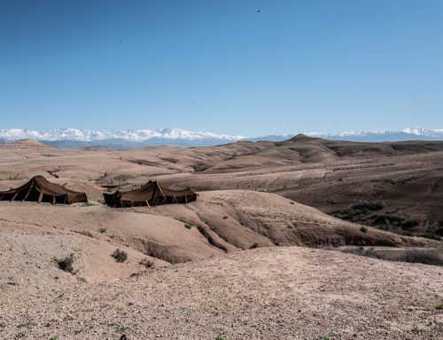Marrakech, voyage d'une gazelle en pays berbère